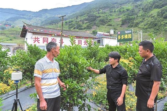 云南怒江老窝探索乡村振兴新路 峡谷首现科技新农人